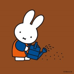 miffy watering seeds
