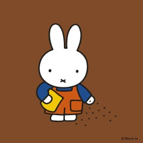 miffy sowing seeds